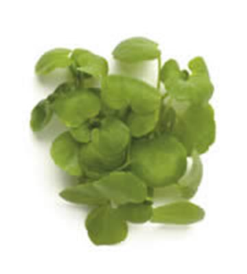 MICRO WATERCRESS PUNNET